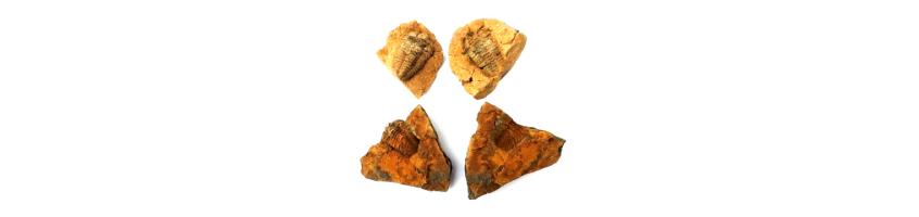 trilobiet bij de edelstenen van gemstoneshop.nl